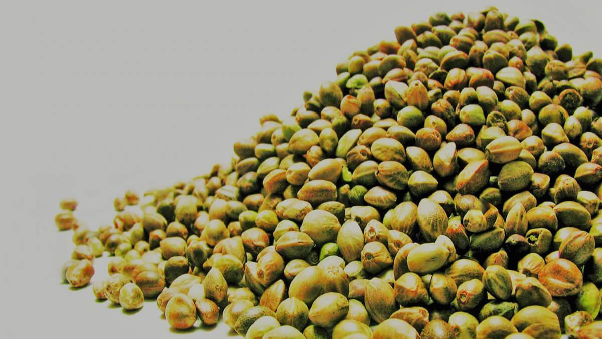 pilha de sementes de cânhamo sem glúten