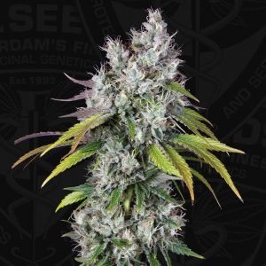 Underdawg OG Feminised Cannabis Seeds by T.H.Seeds
