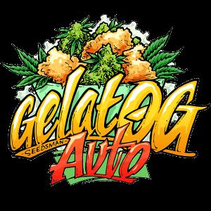 Gelat OG Autoflowering cannabis seeds