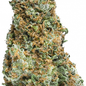 Big Bruce Feminised Cannabis Seeds by Mega Buds