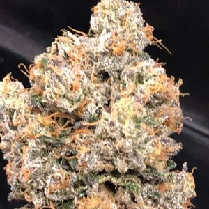 Dankalato Feminised Cannabis Seeds by Dank Genetics