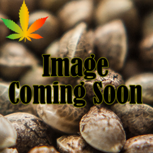 Image coming soon text over cannabis seeds
