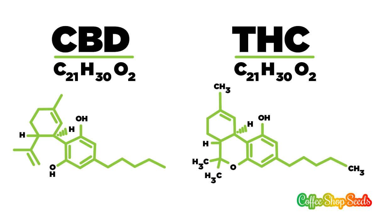 Estructura molecular de CBD y THC