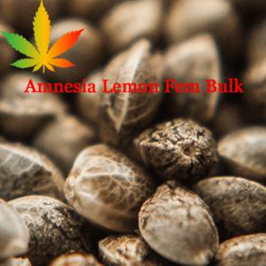 Amnesia Lemon Feminised Bulk Cannabis Seeds