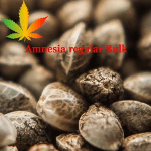 Amnesia Regular Bulk Seeds