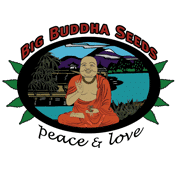 Big Buddha Seeds