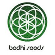 Graines Bodhi