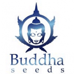 Buddha Seeds cannabis seed breeders