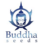 Buddha Seeds wietzaadkwekers