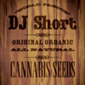 DJ Short cannabis seeds