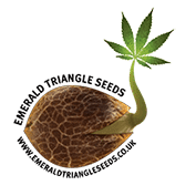 Emerald triangle cannabis seed breeders