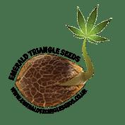 Emerald trekant cannabis frø opdrættere