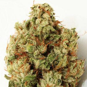 Green Ninja Feminised Cannabis Seeds by Heavyweight Seeds