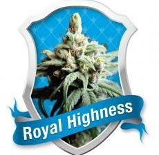 Royal Highness Feminised Cannabis Seeds by Royal Queen Seeds