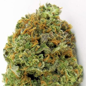 Wipeout Express Auto Feminised Cannabis Seeds By Heavyweight Seeds