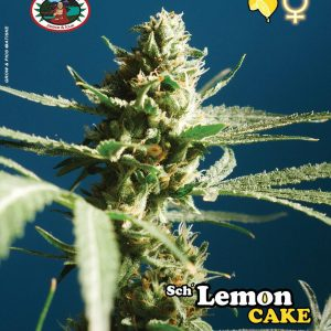 Lemon Cake Feminised Seeds by Big Buddha Seeds