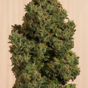 Blue Dream CBD Feminised Cannabis Seeds by Humboldt Seeds