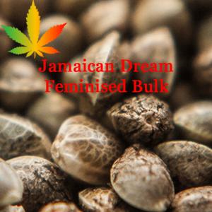 Jamaican Dream Feminised Bulk Cannabis Seeds