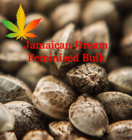 Semillas de cannabis a granel feminizadas Jamaican Dream