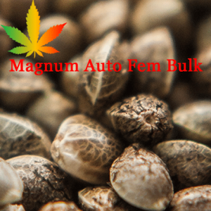 Magnum Auto Feminised Bulk Cannabis Seeds