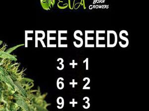 Nasiona Eva - darmowe nasiona