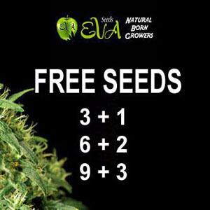 Eva Seeds - Free Seeds