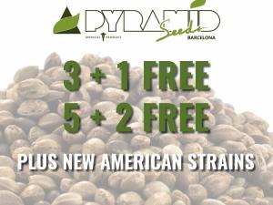 Pyramid Seeds - BEZPŁATNE nasiona