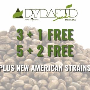 Pyramid Seeds - FREE Seeds