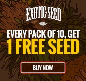 Exotic Seeds - FREE Seed