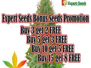 Expert Seeds - DARMOWE nasiona