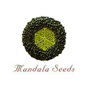 Mandela frø