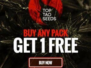 Najlepsze nasiona Tao - BEZPŁATNE nasiona