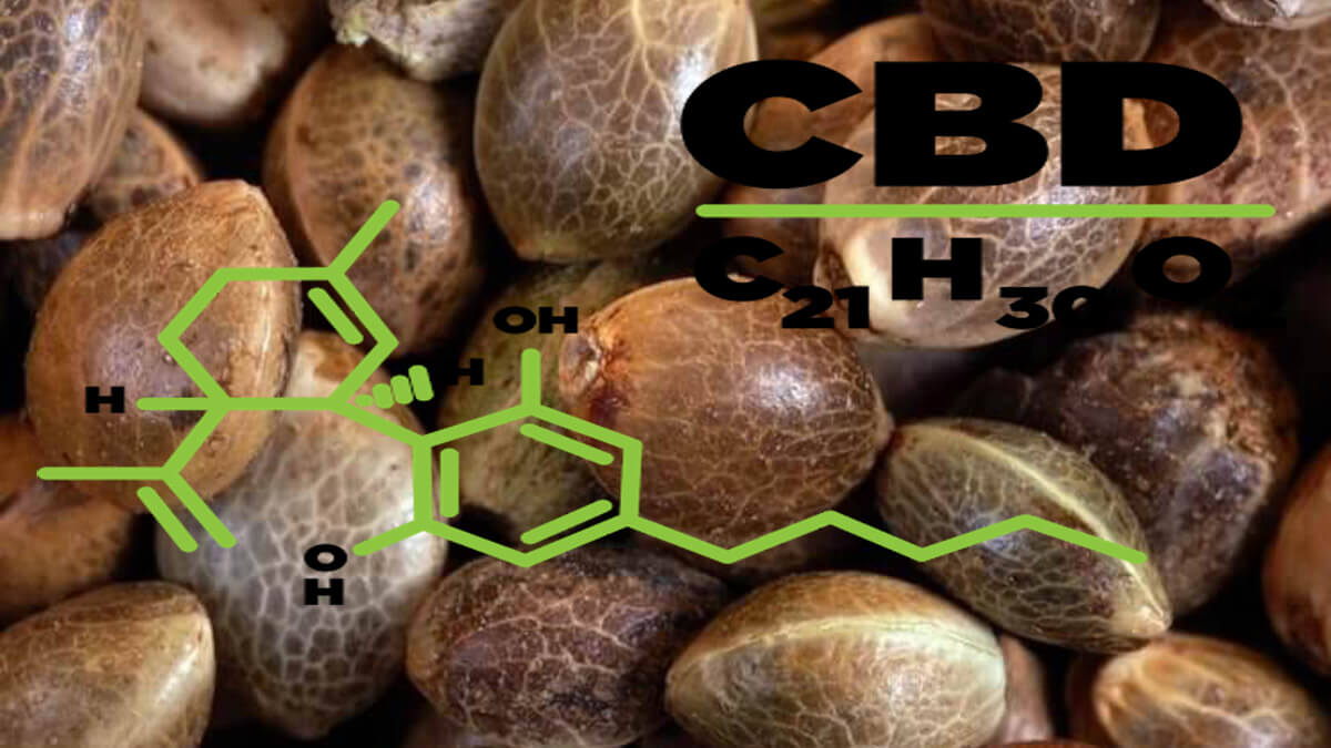 Types of CBD Seeds – What to Know