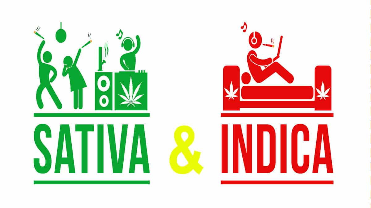 Sativa and Indica – Everything You Need to Know
