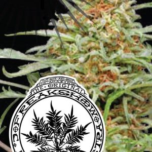 Freakshow Regular Cannabis Seeds di Humboldt Seed Co.