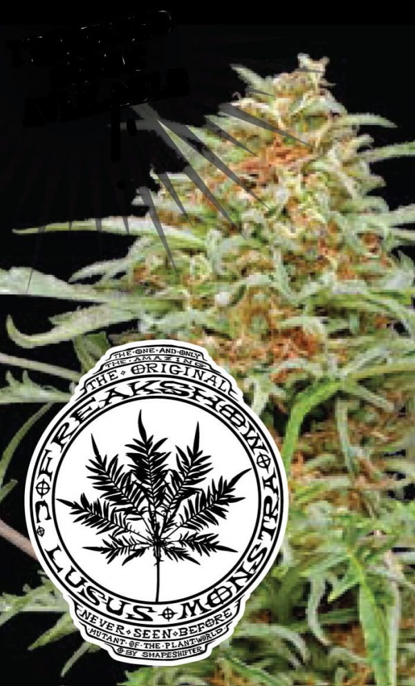Freakshow Regular Cannabis Seeds by Humboldt Seed Co.