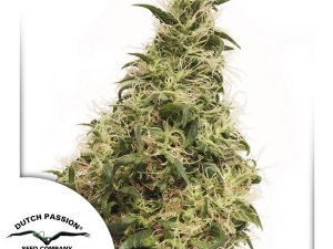 Semi di cannabis femminizzati THC-Victory di Dutch Passion