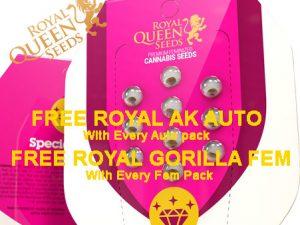 Royal Queen Seeds - darmowe nasiona