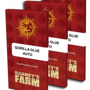 Gorilla Glue Auto Feminised Cannabis Seeds by Barney's Farm