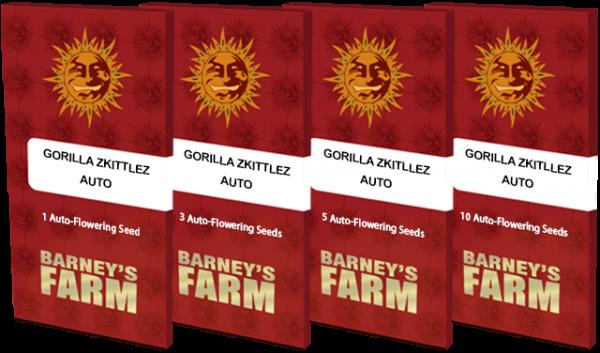 Gorilla Zkittlez Auto Feminised Cannabis Seeds by Barney's Farm