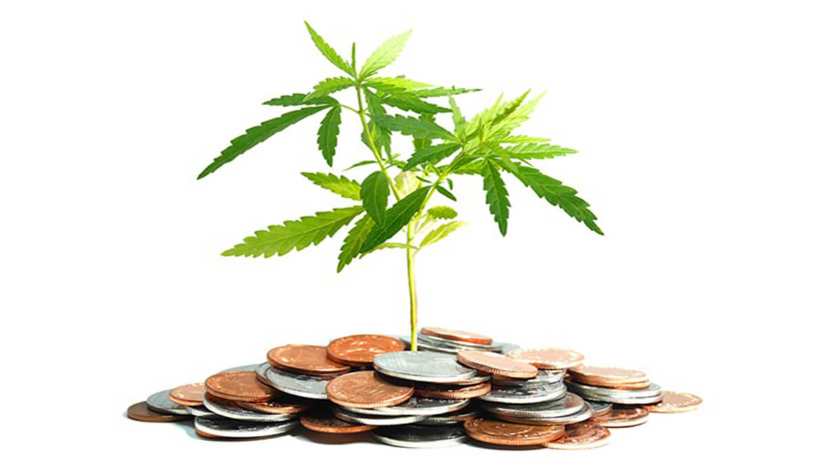 Growing Guide for Cannabis – How Much Will It Cost?
