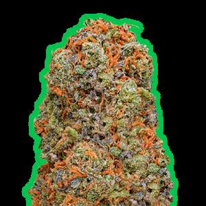 Monster Gelato Feminised Cannabis Seeds by Monster Genetics