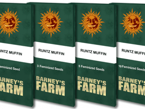 Runtz Muffin Feminised Cannabis Seeds af Barney & #039; s Farm Seeds
