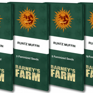 Runtz Muffin Feminised Cannabis Seeds by Barney's Farm Seeds