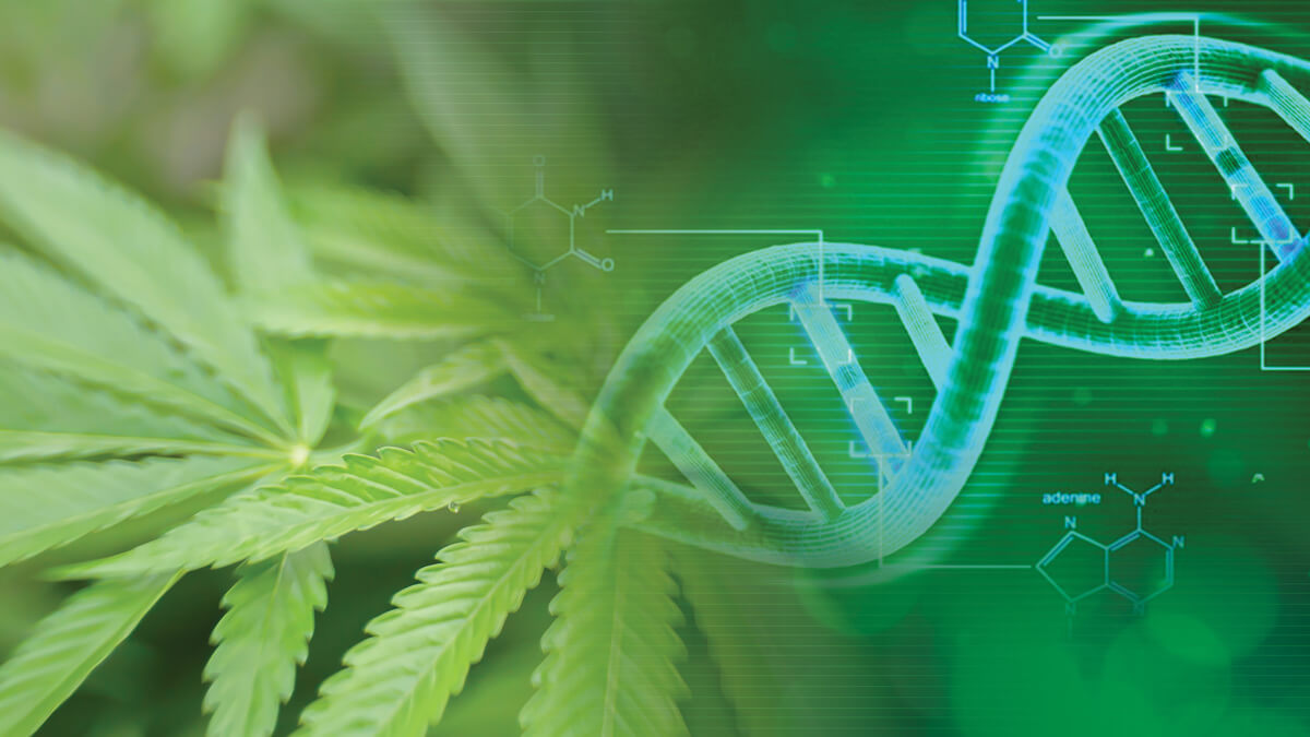 Understanding the Functions of Cells in Cannabis Plants