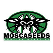 mosca Seeds cannabiszaadkwekers