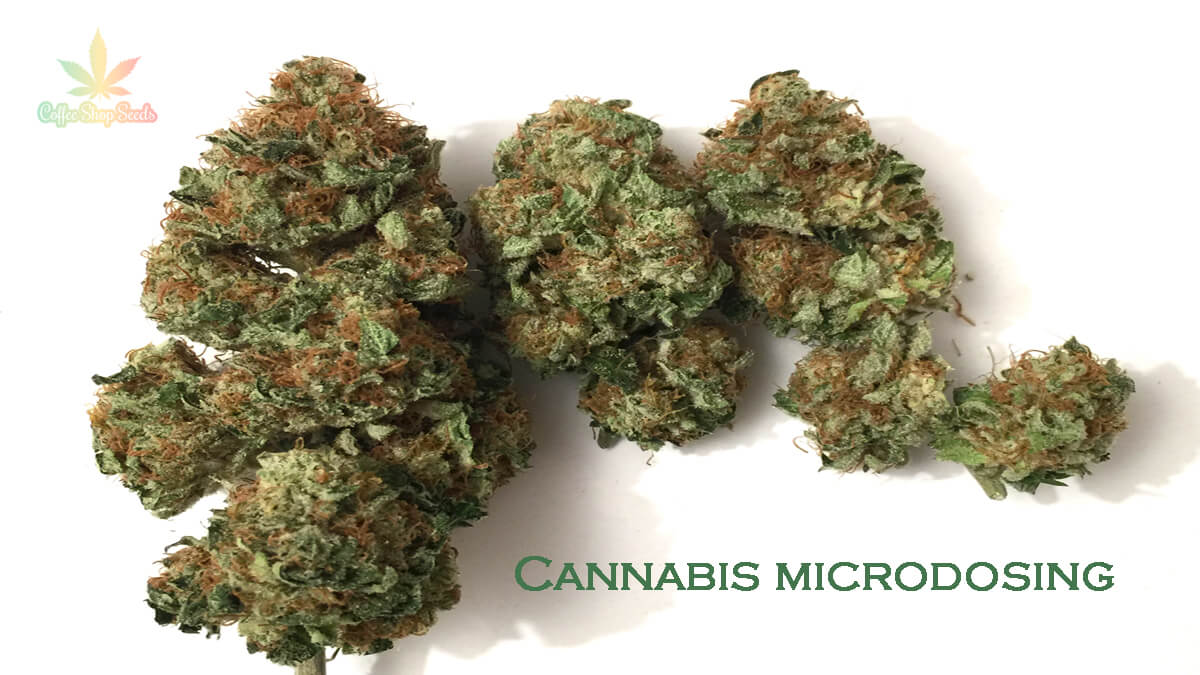 Understanding Microdosing and Medical Marijuana