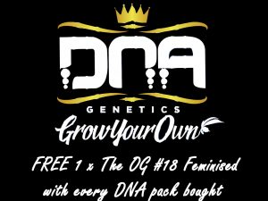 DNA Genetics - FREE OG #18 Fem