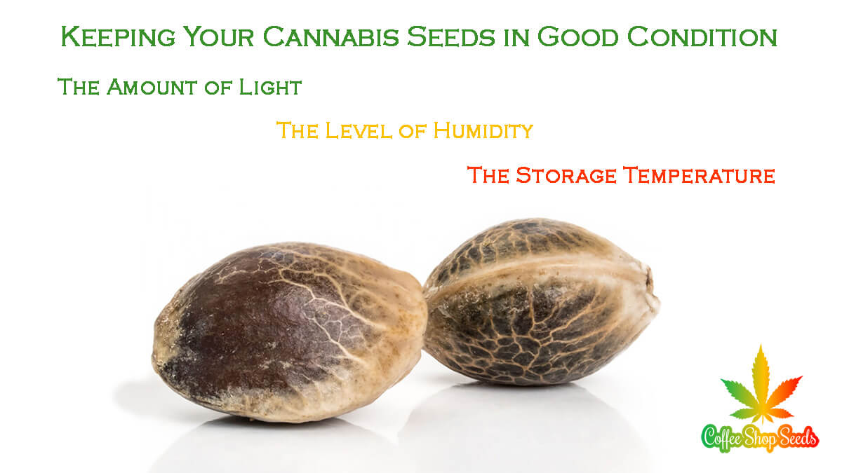 Keeping Your Cannabis Seeds in Good Condition