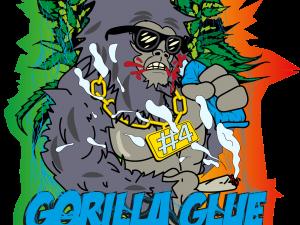 Gorilla Kleber 4